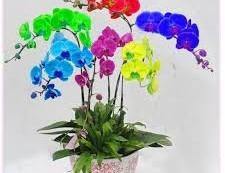 Çiçek Anlamları