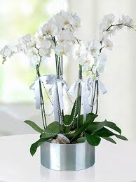 çiçek anlam 3
