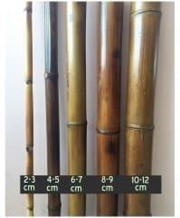 bc-bambu2