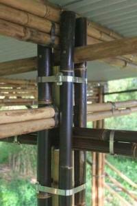 bc-bambu4